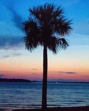 Palm trees, summer breeze. ✌️