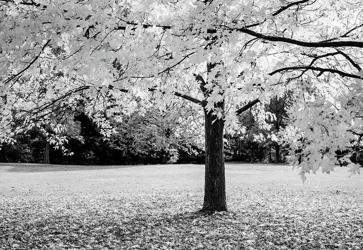 Olga Olay Photograph - Maple Tree by Olga Olay #OlgaOlayFineArtPhotography #ArtForHome #FineArtPrints #Fall #Homedecor