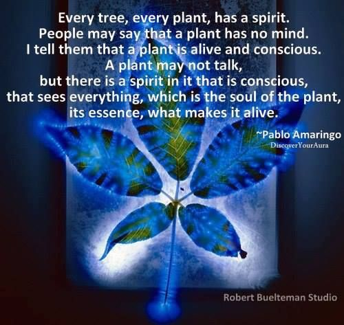 """Pablo Amaringo: """"Every tree, every plant, has a spirit. People may say that a plant has no mind. I tell them that a plant is alive and conscious. A plant may not talk, but there is a spirit in it that is conscious, that sees everything, which is the soul of the plant, its essence, what makes it alive."""""""