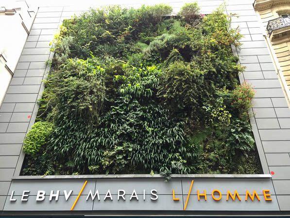 Le mur végétal de Patrick Blanc LE BHV MARAIS Homme (Paris, France) http://www.pariscotejardin.fr/2015/11/le-mur-vegetal-du-bhv-homme-paris/
