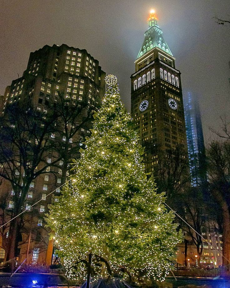 Madison Square Park Christmas Tree by @chandlelee | newyork newyorkcity newyorkcityfeelings nyc brooklyn queens the bronx staten island manhattan