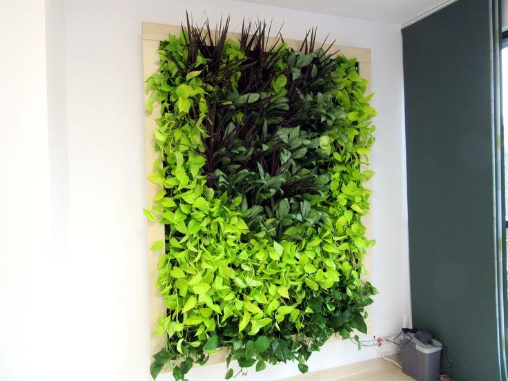Green Walls @ Spitalul Ponderas