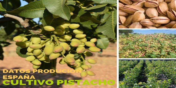 Datos de la produccion pistacho españa
