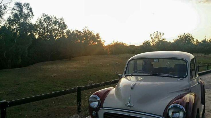 Summer evening in Tamworth