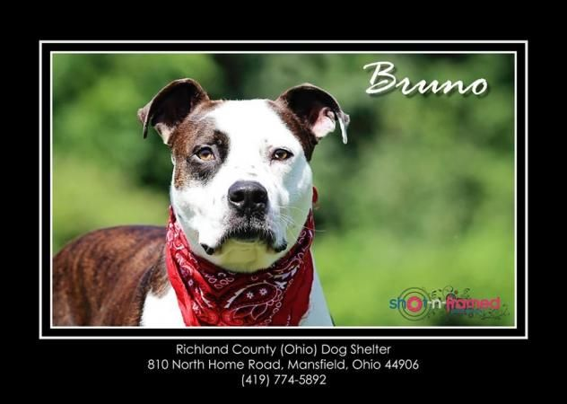 Dog Adoption Mansfield Ohio
