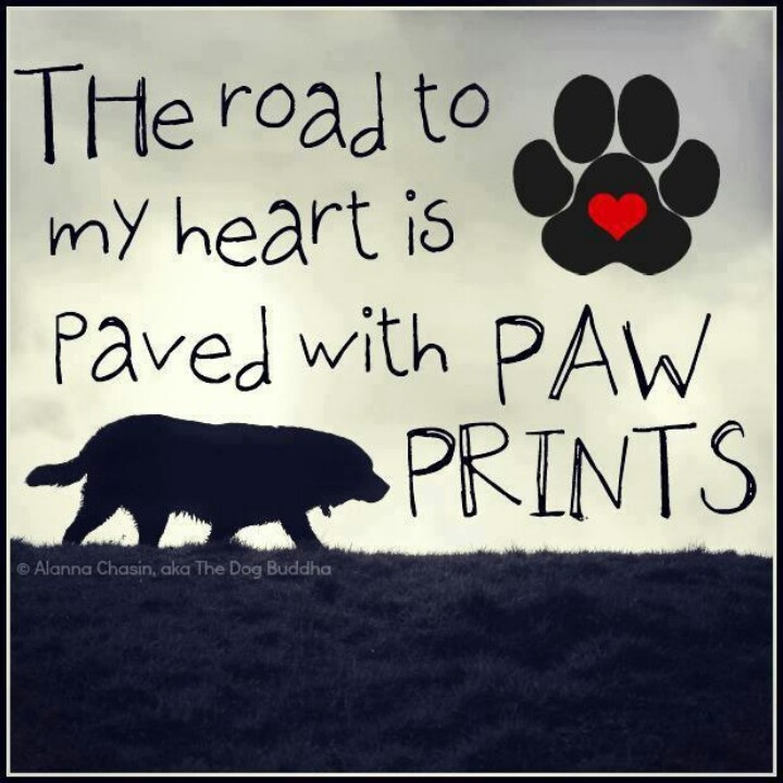 Quotes About Paw Prints. QuotesGram