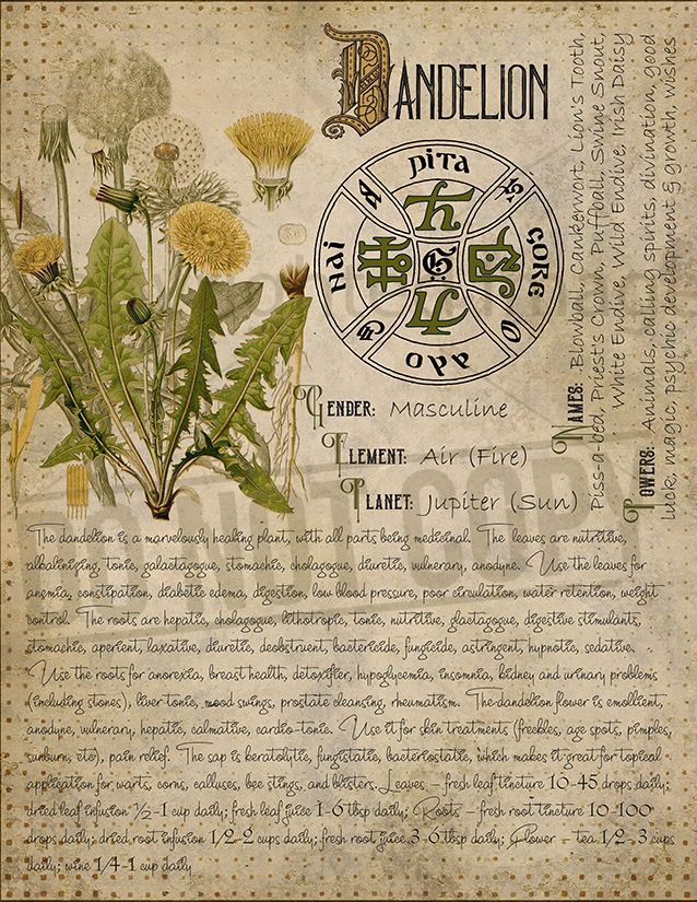 Witchcraft Printable Book Of Shadows Herbal Grimoire Bos Sheets Digital Download Of Plants Spell Ingredient Green Witch Herbarium 16 Book Of Shadows Magic Herbs Herbal Magic