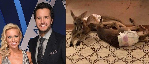 Caroline and Luke Bryan's Kangaroos, Margo and Todd, Are Adjusting Nicely to the Good Life