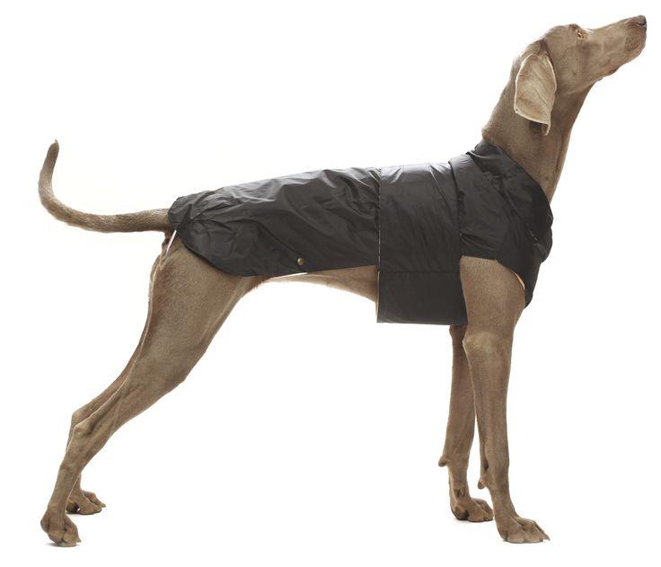 die besten 25 hund regenmantel ideen auf pinterest hundemantelmuster hundemantel. Black Bedroom Furniture Sets. Home Design Ideas