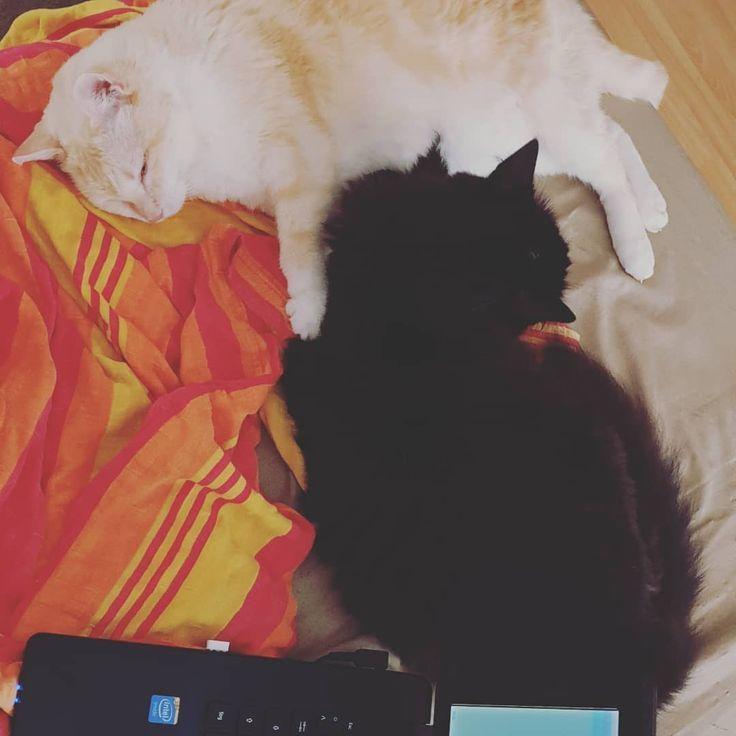 Cats Wir Faulenzen Katzemude Ein Wenig Und Ma Faulenzen Faule Frisuren Tiere