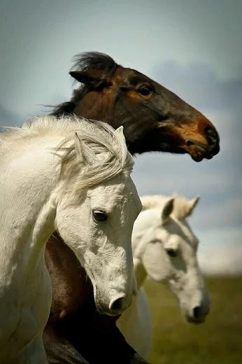Φωτογραφία: Ελα μαζί μου... Να γίνουμε ελεύθερα άγρια άλογα.... να τρέξουμε μαζι το δρόμο προς τη ελευθερία!...(Ε.D)