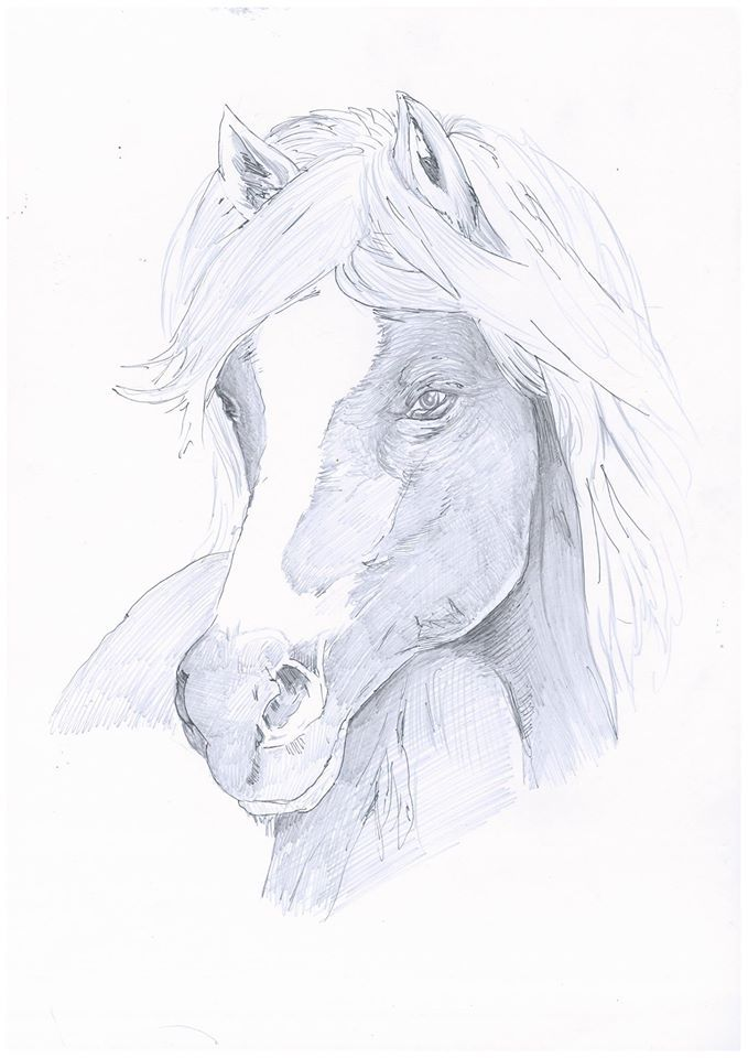 horse drawing in pencil to see more go to my art page on Facebook 'Matt fords artwork'