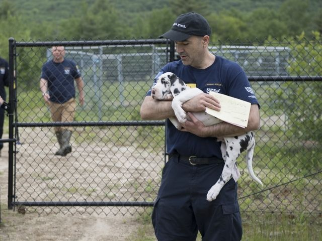 Rescuers saved 84 dogs from a puppy mill in New Hampshire. It was so dirty the dogs had trouble walking without sliding on their own feces.