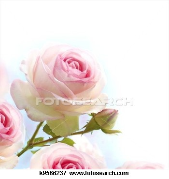 Roze, rozen, achtergrond, floral, grens, gradiant, blauwe, witte Bekijk Grotere Foto