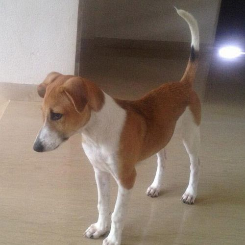 The stray pup Mahendra Singh Dhoni adopted and rescued. Pic/mid-day archives |  | www.indipin.com #indipin