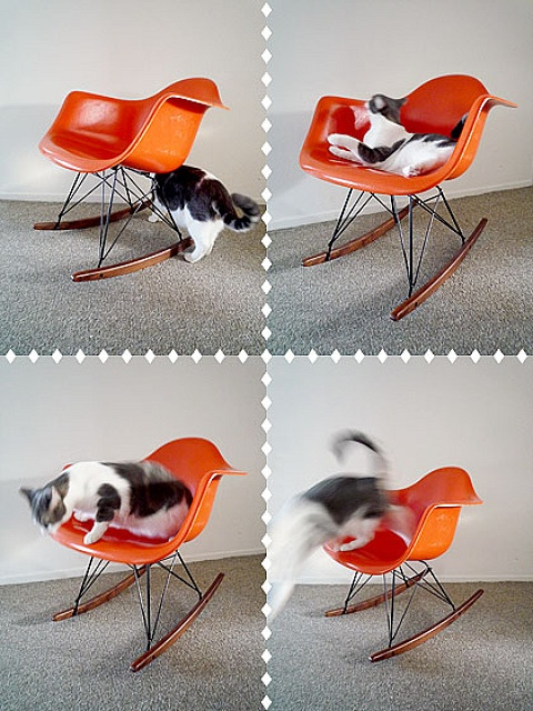someday, eames rocker, you WILL be mine.  and i like this photographic evidence of a kitty enjoying the chair...i think my little ladies would approve!