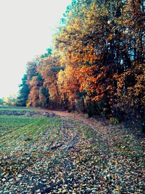 Jesień, natura, spacer, relaks, piękno. True colors... autumn