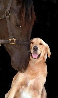 Horse and dog friends