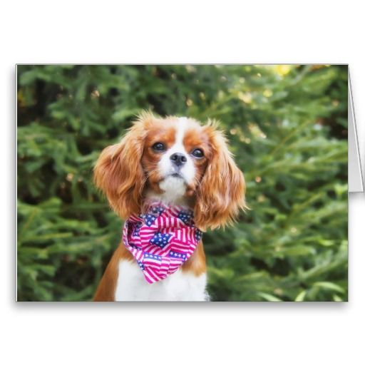 80 best Cavalier King Charles Spaniels Zazzle Store images on