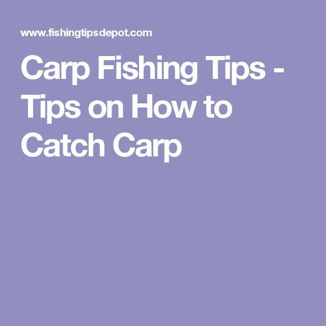 Best 25 Carp Fishing Tips Ideas On Pinterest Carp