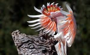 Steve Parish photo of bird