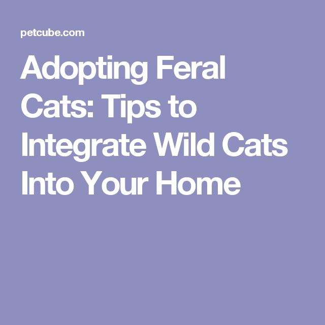Adopting Feral Cats: Tips to Integrate Wild Cats Into Your Home
