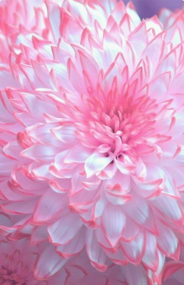 Pretty In Pink Pink Flowers Amazing Flowers Flowers Photography