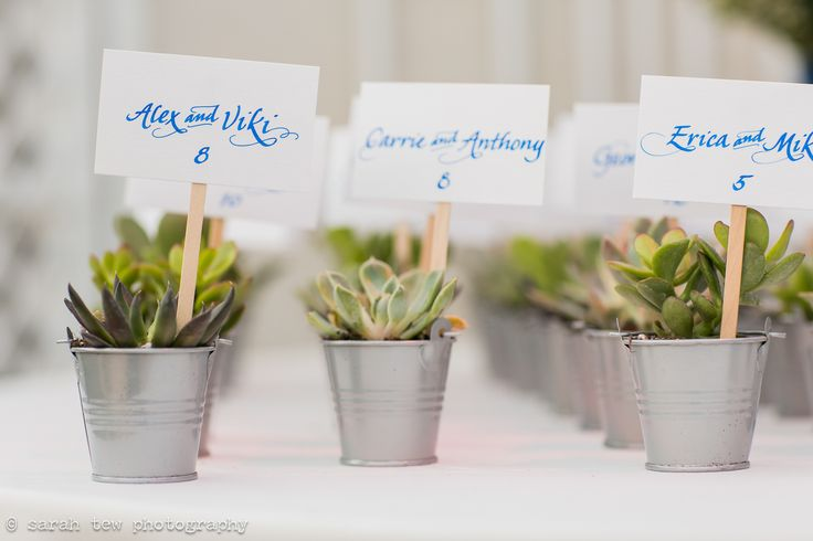 Simple August wedding at The Palm House at Brooklyn Botanic Garden NYC ©️ Sarah Tew Photography seen at https://www.sarahtewphotography.com/blog/august-wedding-palm-house-brooklyn/ featuring blue, pink, orange, purple, yellow, Michelle NY, Stems Architectural Florist