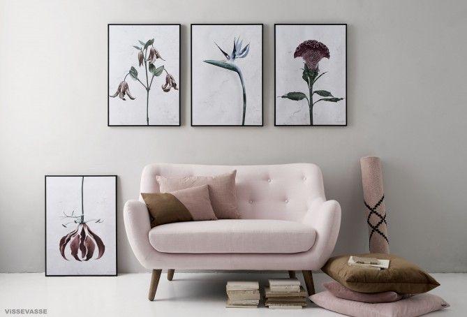 Botanica 4 posters.Colosia Clematis Strelizia Gloriosa.LowRes