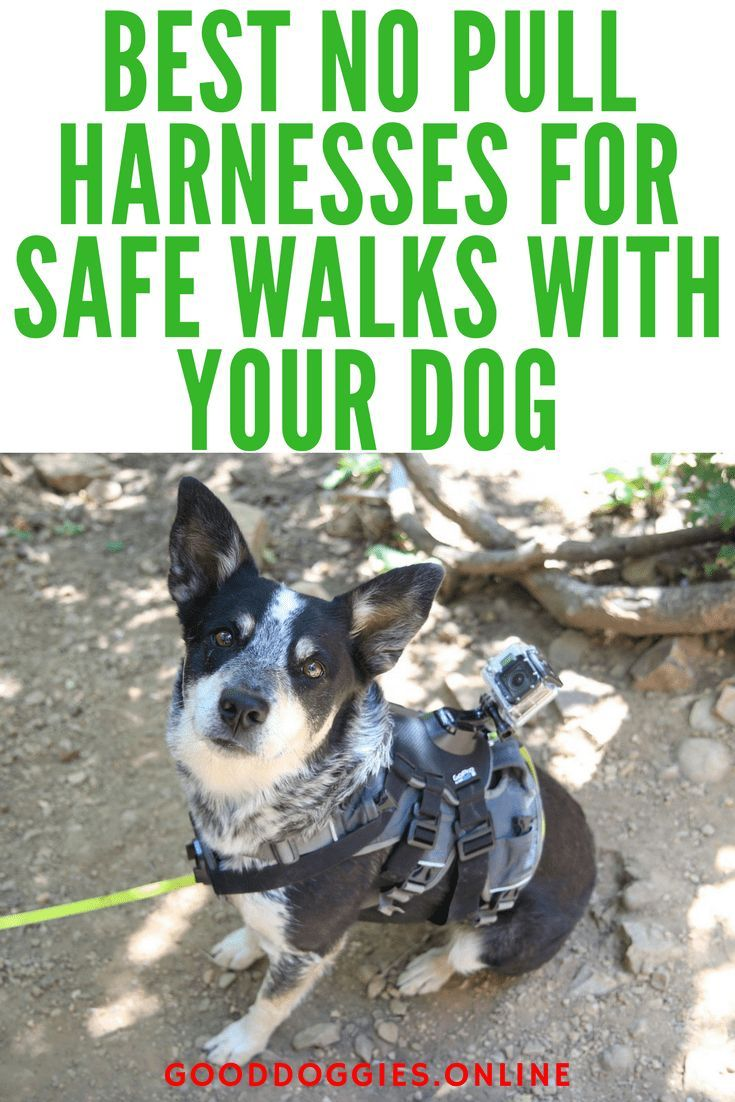 Best No Pull Harness Dogs Dog Harness Dog Care Tips