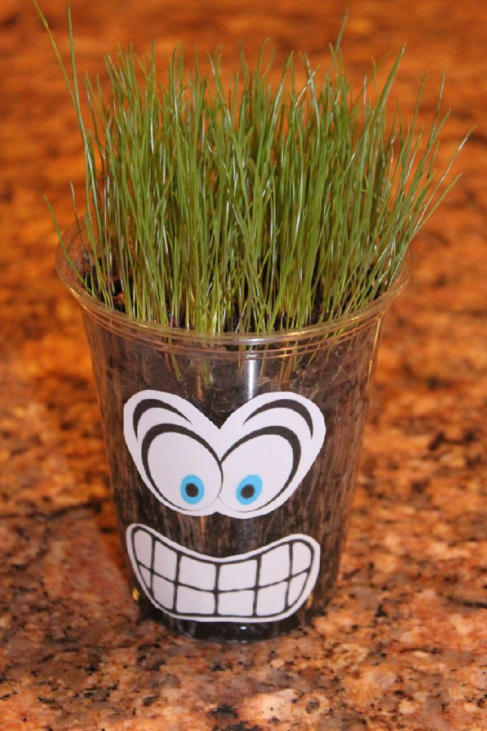 Akela's Council Cub Scout Leader Training: Grass Heads are a great way to teach Cub Scouts about Growing Seeds - Theme Planting Seeds of Kindness