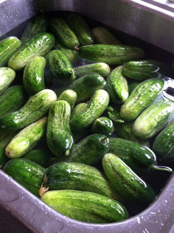Homemade Refrigerator Dill Pickles *makes 4 quarts of ...