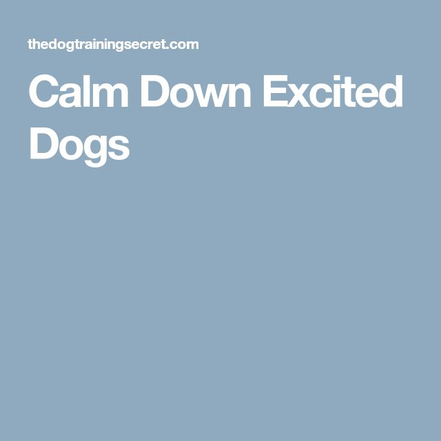 Calm Down Excited Dogs
