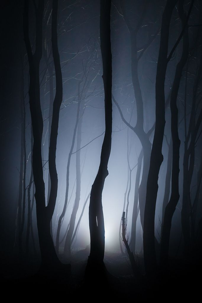 Stanmer Park, Brighton, England - Taken on a misty night in April.                                                                                                                                                                                 More