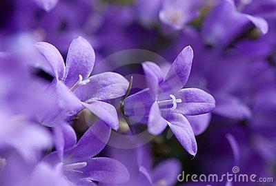 Preciosa flor malva