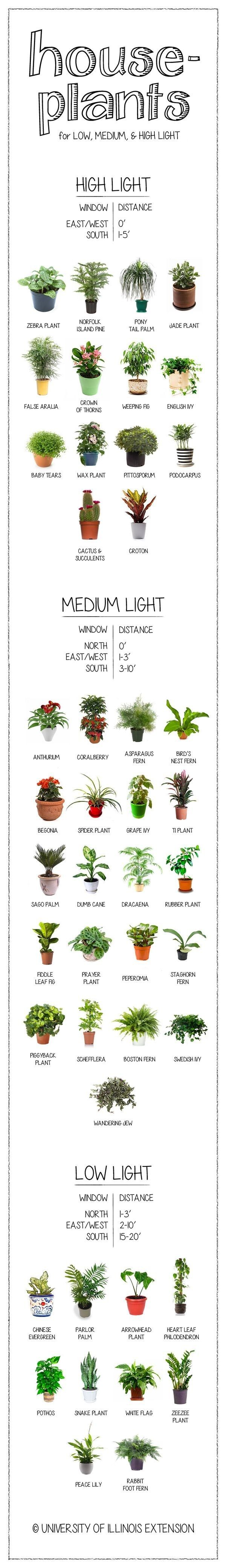 How much light does your houseplant need? Find out on this handy chart. | 23 Absolutely Essential Gardening Diagrams