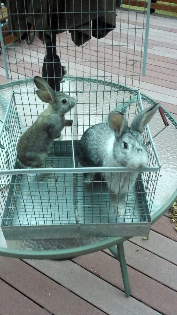 444 best rabbits images on pinterest raising rabbits meat