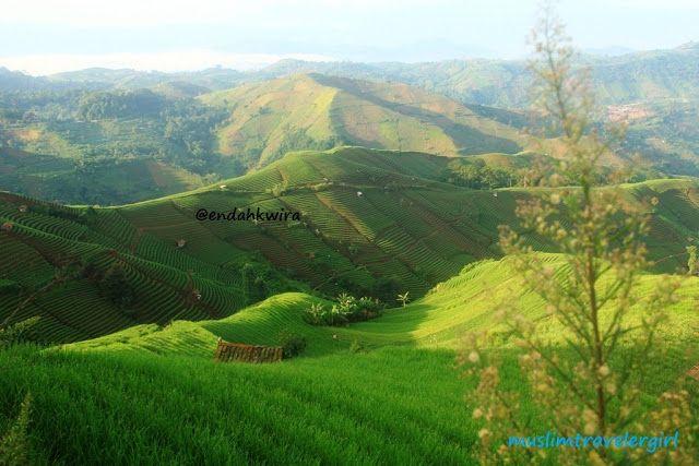 Leeks farm at Argapura region, Majalengka City, West Java.