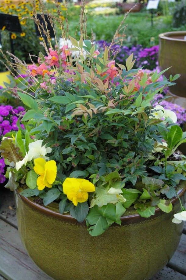 20 best fall and winter container garden ideas images on pinterest fall containers plants - Winter container garden ideas ...