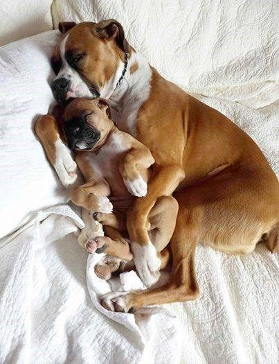 Snuggling With Mom