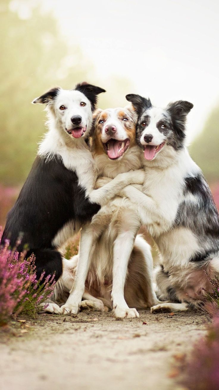 best future pets images on pinterest cutest animals pets and