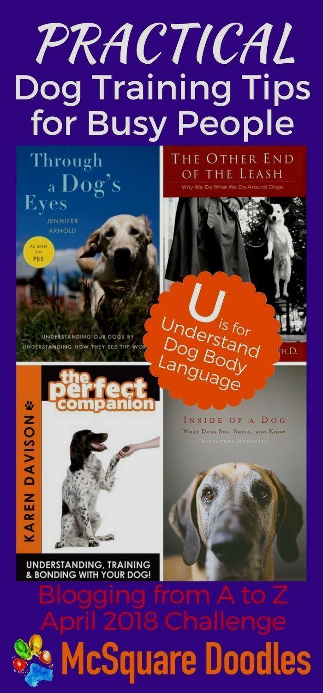 Dog Obedience Training Newmarket Dogtraining Dogtrainingtips