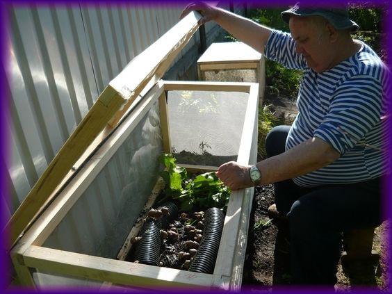 виноградная улитка, выращивание виноградных улиток, продажа виноградныж улиток, всё о виноградной улитке, разведение виноградных улиток.