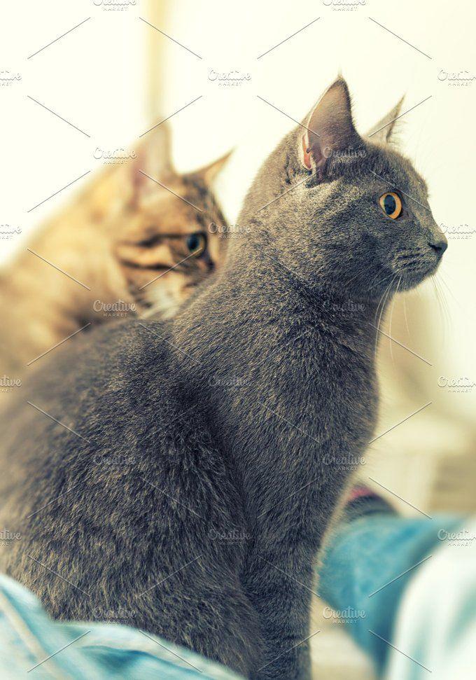 Tabby and gray cats by jordygraph on @creativemarket