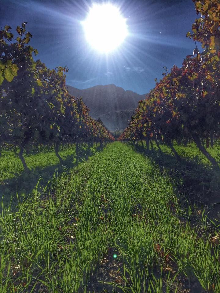 #Franschhoek #Landscape the #Winelands of Grande Provence Heritage Estate