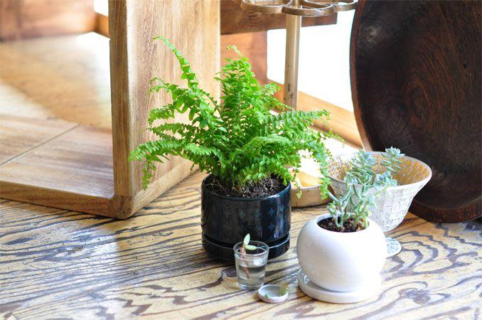 ARABIA(アラビア)の植木鉢とLaube(ラウベ)の靴下