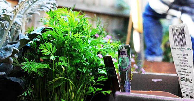 List Of Edible Plants That Are Easy To Grow Indoors