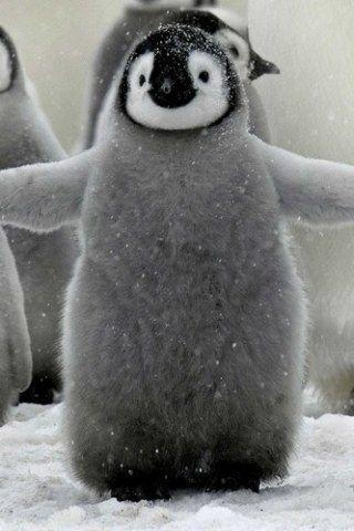 No hay riesgo de coger frío si eres tan suave y esponjoso como este pingüino.