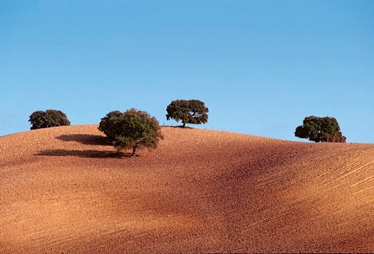 Olive Trees - Andalucía, Spain