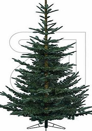 Kaemingk Nobles Green Fir Artificial Christmas Tree - 1.5m (5ft) Natural cut Christmas tree. Size: 5ft - 150cm. Mixture of hard and soft needles. Natural looking Christmas tree. Green hinged branches. Complete with metal stand. Suitabl (Barcode EAN = 8718532071383) http://www.comparestoreprices.co.uk/december-2016-week-1-b/kaemingk-nobles-green-fir-artificial-christmas-tree--1-5m-5ft-.asp